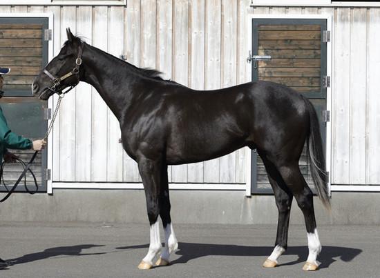 冠名「サトノ」&池江厩舎の高馬...