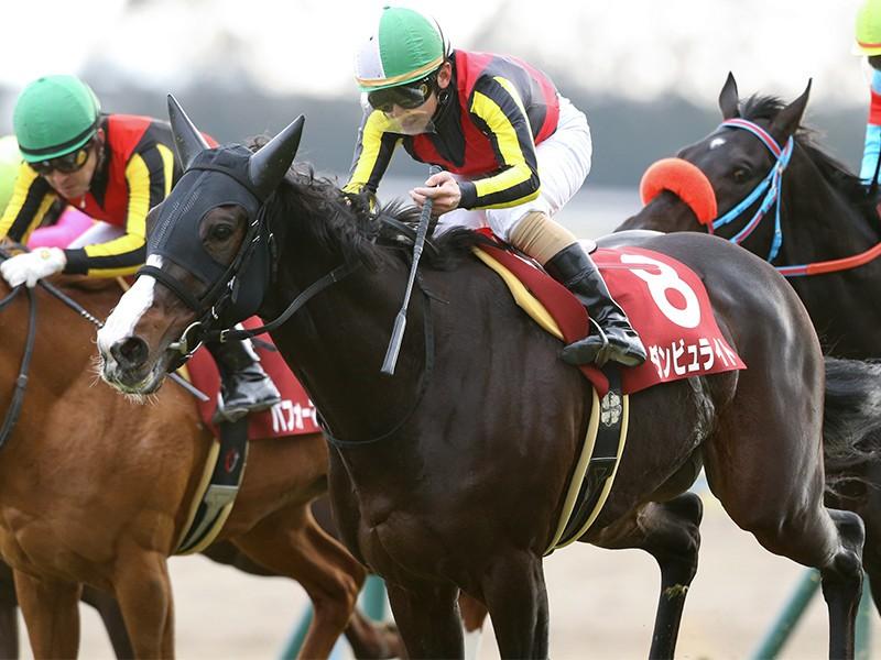 京都大賞典は例年の傾向から一変。好位から粘り込める3頭が狙い目だ|競馬|集英社のスポーツ総合雑誌 スポルティーバ